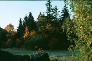 Kartong 1, Låda 1 1 - Prästkragar + skog - Stor klipphäll - Stockholms skärgård - Is på strån - R